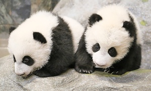 Toronto Zoo: One-Year Toronto Zoo Membership with Unlimited Visits (15% Off). Seven Options Available.