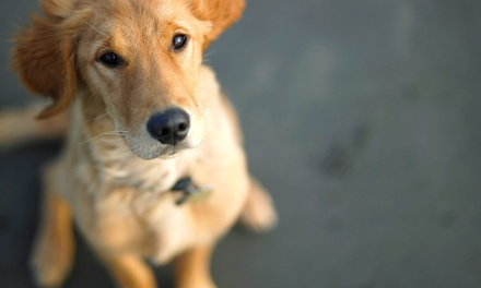 Pet Check-Up with Vaccinations, Dental Service, or Boarding at Pleasant Hill Animal Hospital (Up to 56% Off)