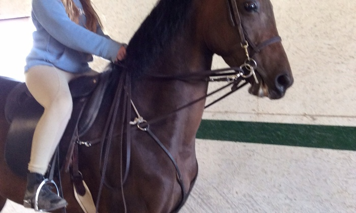 Executive Farms - Executive Farms: Two Horseback-Riding Lessons at Executive Farms (66% Off)