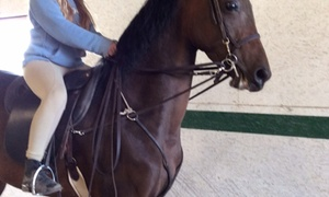 Executive Farms: Two Horseback-Riding Lessons at Executive Farms (66% Off)