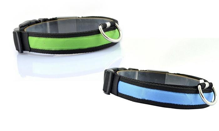 collier pour chien phosphorescent
