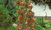 3er-Set Erdbeerpflanzen Hummi  14,99 € -Pflanzen