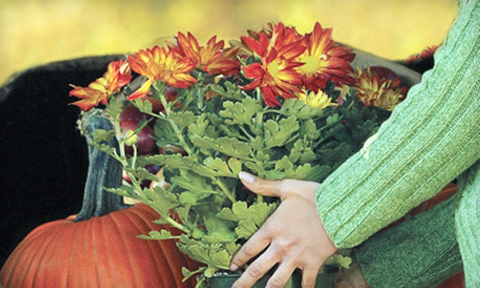 Lowney's Landscaping and Garden Center - Appleton: $15 for $30 Worth of Trees, Shrubs, Perennials, and Mums at Lowney's Landscaping and Garden Center
