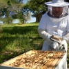Up to 72% Off Beekeeping Class at Round Rock Honey