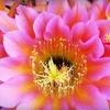 Desert Gardens Nursery Phoenix - Paradise Valley: $50 Worth of Desert Plants and Landscaping