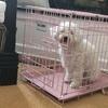 2-Door Puppy Crates with Free Divider Panel