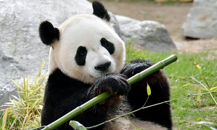 Toronto Zoo Visit for a Child, Senior, or Adult (40% Off)