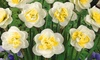 White Lion Double Daffodil Flower Bulbs (5-, 10-, or 20-Pack)