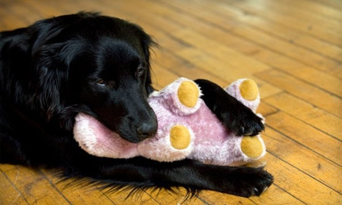 Doggie Style Bowtique - West Plaza: $10 for $20 Worth of Pet Treats, Toys, and Accessories at Doggie Style Bowtique