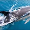 Up to 53% Off Dolphin-Viewing Tour in Edisto Beach