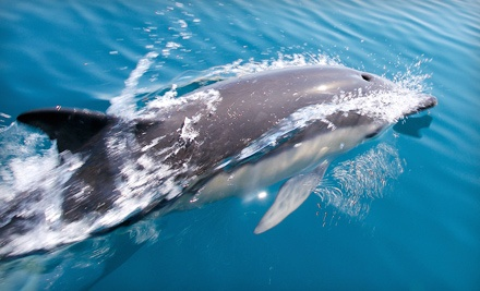Two Tickets for a 2-Hour Dolphin Ecotour ($80 value) - Botany Bay Ecotours in Edisto Beach