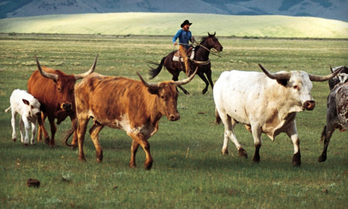 Cherry Creek Lodge - Young: $62 for a Cattle-Drive Experience at Cherry Creek Lodge in Young ($125 Value)