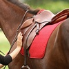 Up to 51% Off Horseback-Riding Lessons in Eastover