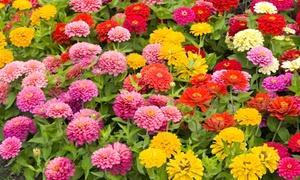 Beautiful Zinnia Roll-Out Gardens (3-Pack)