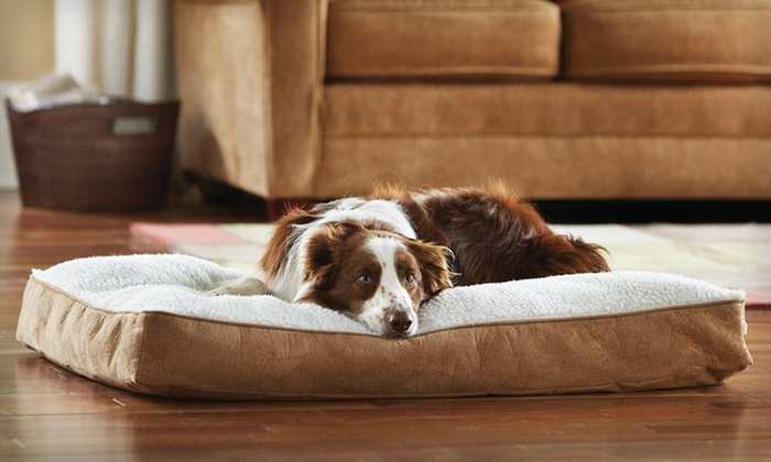 Animal Planet Sherpa Memory-Foam Dog Bed: $29 for an Animal Planet Large Sherpa Memory-Foam Dog Bed ($49.99 List Price). Free Shipping and Free Returns.