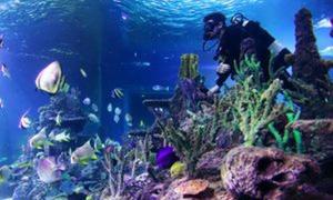 Skegness Aquarium: Diving with Sharks Experience at Skegness Aquarium (27% Off)
