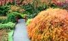 Conifer Kingdom - Silverton: $20 for $40Worth of Japanese Maples, or Ginkgo at Conifer Kingdom
