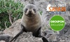 South Coast and Seal Colony Tour