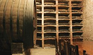 BODEGA DON BOSCO: Desde $269 por 1 o 2 cajas de 6 vinos Varietal a elección en Bodega Don Bosco
