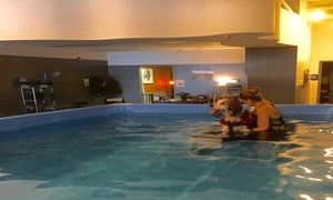 The Dog Dive Canine Aquatics And Massage: $35 for $60 Groupon — The Dog Dive- Canine Aquatics & Massage