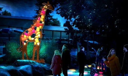 ZOO LIGHTS GROUPON