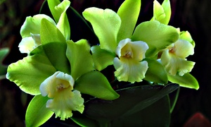 Pelican Coast Farms: Orchids and Growing Supplies at Pelican Coast Farms (40% Off). Two Options Available.