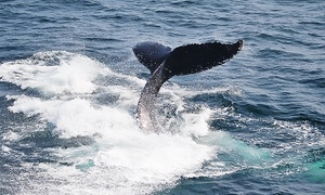 29% Off Provincetown Whale Watch from Captain John Boats at Captain John Boats, plus 6.0% Cash Back from Ebates.
