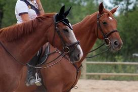 Écuries d'En Cayla: 1 mois de cours d'équitation à 24,90 € aux Écuries d'En Cayla