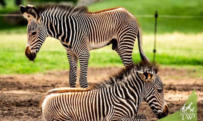 Tanganyika Wildlife Park in - Goddard, KS | Groupon