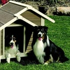 Up to 44% Off an Outback Twin Peaks Doghouse