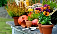 £19 for £30 to Spend at High Trees Garden Centre (37% Off)