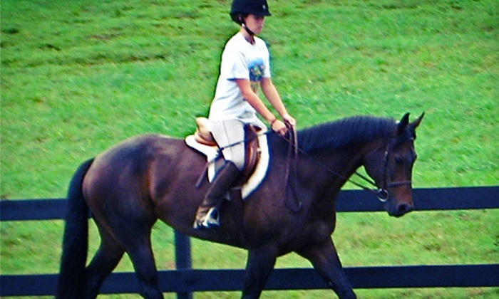 Blue Point Stables - 5: Package of 5 or 10 60-Minute Horseback-Riding Lessons at Blue Point Stables (Up to 52% Off)