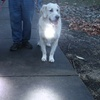 Puplight 2 Safety Light with Reflective Collar