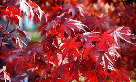 Acer Duo Collection for £8.99 With Free Delivery