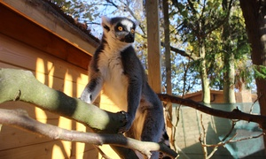 Hemsley Conservation Centre: Wild Animal Experience with Meal and Six-Month Membership to Hemsley Conservation Centre (52% Off)