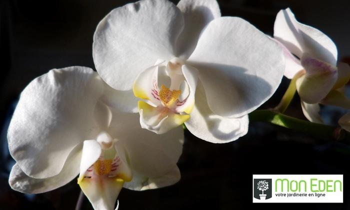 """MON EDEN: Orchidée """"Tendresse"""", """"Amour toujours…"""" ou""""A la folie !"""" dès 18,90 €avec Mon Eden (jusqu'à 50% de réduction)"""