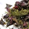 Videolezioni per usare alghe nella medicina