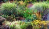 Five or Ten Assorted One-litre Perennial Plants