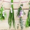 Kurs online: ziołolecznictwo