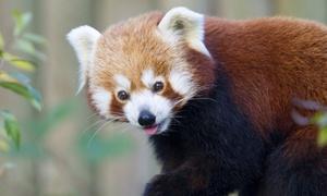Parc Zoologique d'amiens: 1 ou 2 entrées pour adultes au zoo d'Amiens dès 5,50 €
