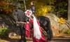 Equestrian Show, Several Dates
