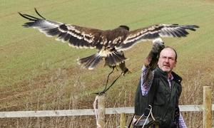South Cave Falconry: Bird of Prey and Farm Entry for a Child, Adult or Family of Four at South Cave Falconry (Up to 45% Off)