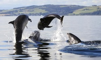 Dolphin-Watching Cruise for One or Two Adults with One Child with Dolphin Spirit Inverness (Up to 27% Off)
