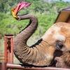 Up to 50% Off Elephants Encounter at Wildlife Safari