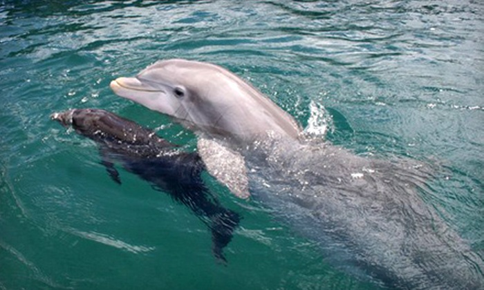 Harborview Charters - Harborview Charters: Shelling Excursion on Morris Island or a Dolphin Tour for Four from Harborview Charters (Up to 52% Off)