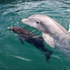 Up to 52% Off a Seashell or Dolphin Tour
