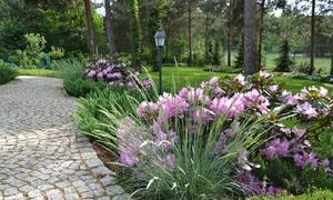 Ogrody Świata: Aranżacja ogrodu: 99,99 zł za groupon wart 1000 zł na koncepcję rabat lub nasadzeń i więcej w pracowni Ogrody Świata