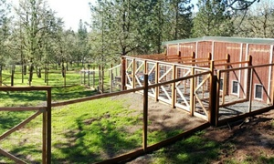 Outback Kennels: $35 for $70 Worth of Services — Outback Kennels
