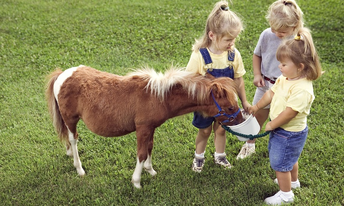 Horsin Around - Calgary : Wagon and Pony Ride and Activities for One or Two Adults and Children at Horsin Around (Up to 28% Off)