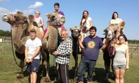 Camel Safari with Refreshments and Optional Meerkat Encounter for Two or Four atOasis Camel Park (Up to 27% Off)